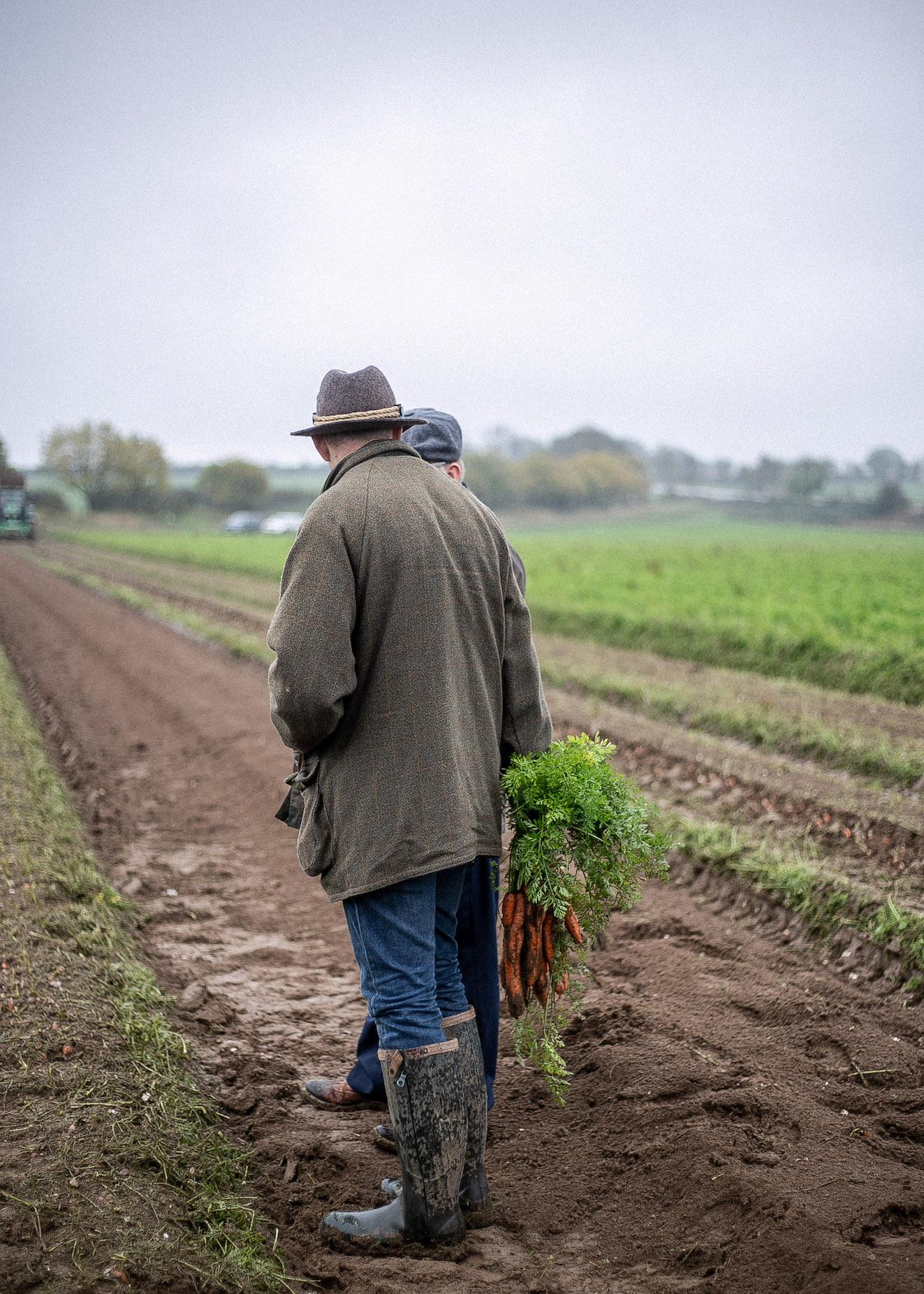 British Organic Carrots